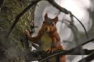 Neugieriges Hörnchen...