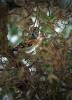 Bergfinken...im Garten...Februar 2015